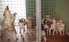 """""""Troppi casi di raccoglitori seriali di cani a Rovigo, è una piaga"""""""