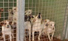 Maxi sequestro di 57 cagnolini. Ora serve una casa per tutti