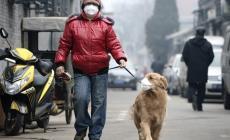 """""""Soffocati dallo smog: aria padana sempre da codice rosso"""""""