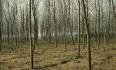 """La filiera """"foresta-legno"""" deve essere salvaguardata e valorizzata"""