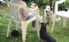 Morti avvelenati tre cani in cinque anni: allarme a Saguedo