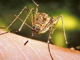 In Veneto, 10 malati di Dengue - La Voce di Rovigo