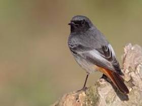 Uccelli di un sito di incontri di piume