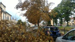 Nubifragio sul Polesine, vento e alberi caduti