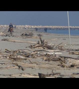 Migliaia di tronchi spiaggiati sul litorale dei lidi