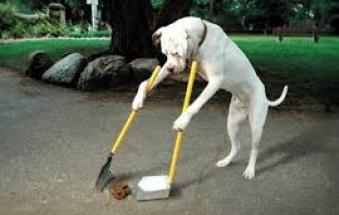 """Padroni dei cani incivili: multateli"""