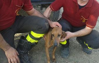 Liberati due cani rinchiusi in una casa