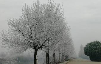 Mattinata glaciale in tutto il Polesine