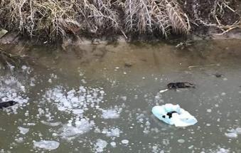Orrore, cuccioli gettati in un fosso muoiono incastrati nel ghiaccio