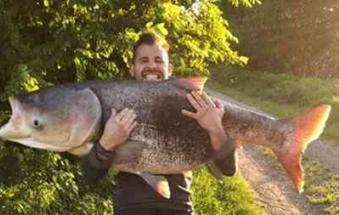 Pescato in Canalbianco un pesce raro di 60 kg
