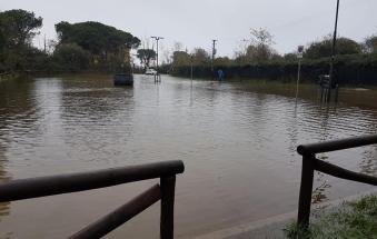 Il giardino botanico finisce sott'acqua