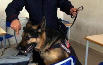 Shock in classe: i cani trovano siringe di eroina e marijuana