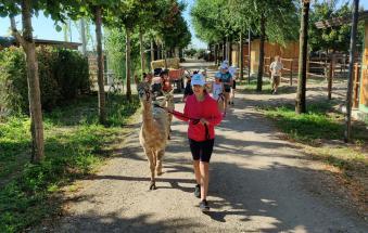 A passeggio con lama e alpaca