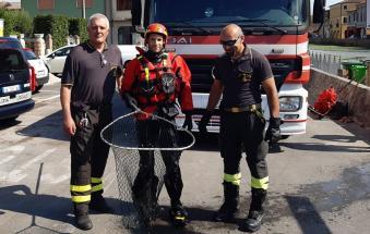 I vigili del fuoco salvano la vecchia micina rimasta intrappolata sotto il ponte