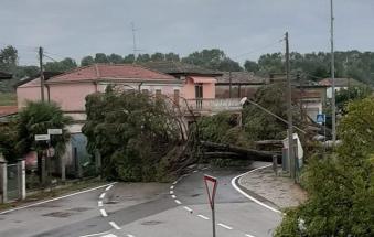 Terrore a Mazzorno, alberi precipitano sulla strada, frazione tagliata a metà