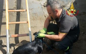 La bella notizia: i vigili salvano due cagnolini incastrati in un tubo