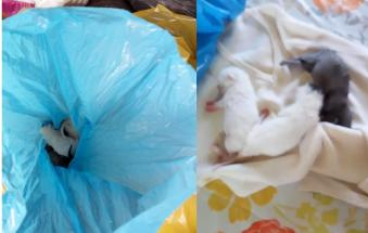 Cuccioli gettati nel bidone delle immondizie