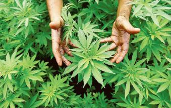 """Scoperta serra di cannabis """"fai da te"""""""