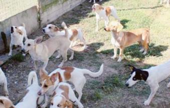 Condannati gli accumulatori di cani