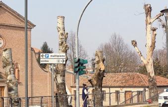 Tagliati gli storici platani davanti alla chiesa dei frati