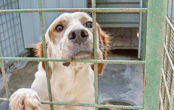 Falsi volontari del canile chiedono soldi porta a porta