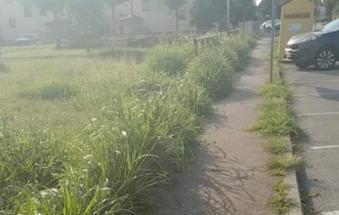 Qui l'erba si mangia il marciapiede