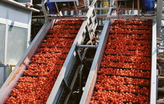 Il satellite per i campi di pomodoro
