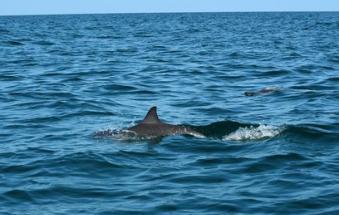 A Barricata i delfini salutano i primi turisti