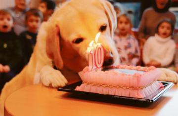 E' ora del compleanno di Peggy, il super cane degli anziani