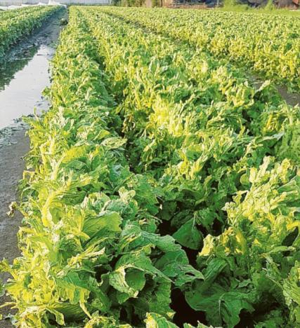 Danni in 100 aziende agricole