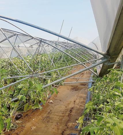 Seconda mazzata per gli agricoltori