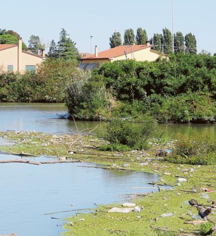 Una conca di rifiuti e carcasse