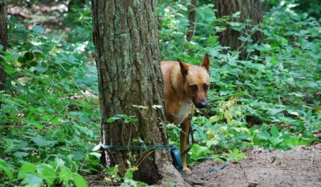 Lega il cane a un albero, ora è sotto processo