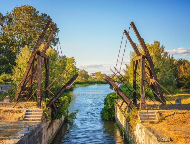 Viaggio tra i girasoli di Van Gogh ad Arles