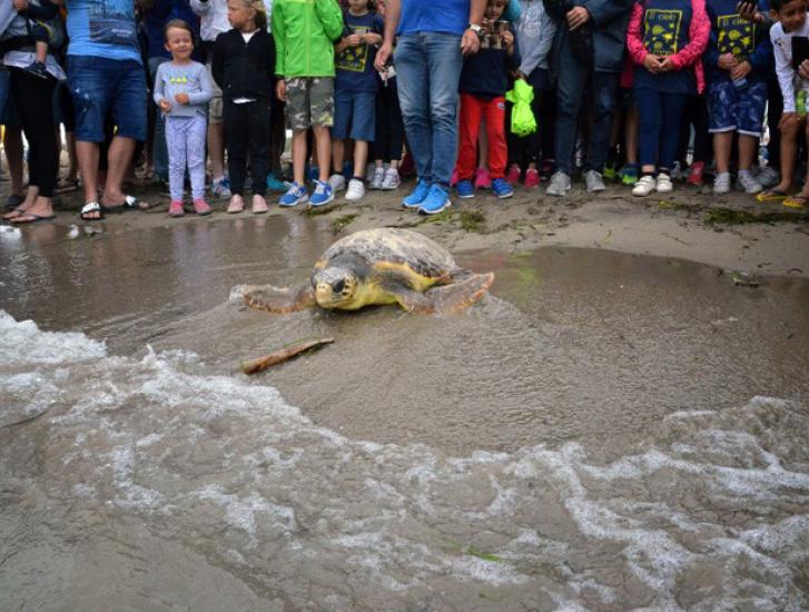 Ariel, la tartaruga liberata in mare