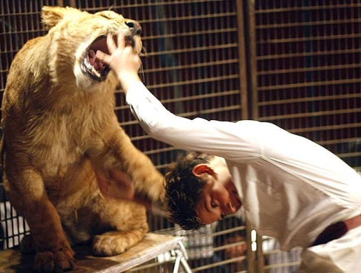 Il circo e gli animali: ma voi siete favorevoli o no all'utilizzo di animali ammaestrati negli spettacoli del circo?