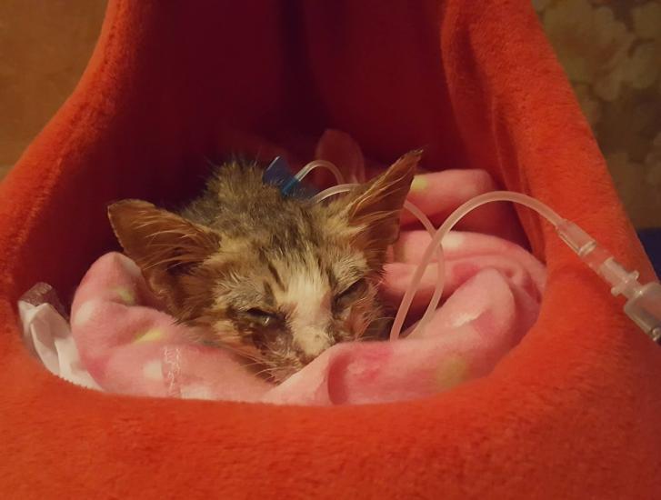 Scava una buca per seppellire vivo un gattino: fermato
