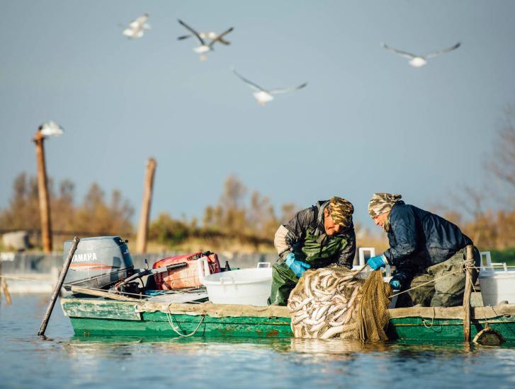 Salvare i delfini o salvare i pescatori?