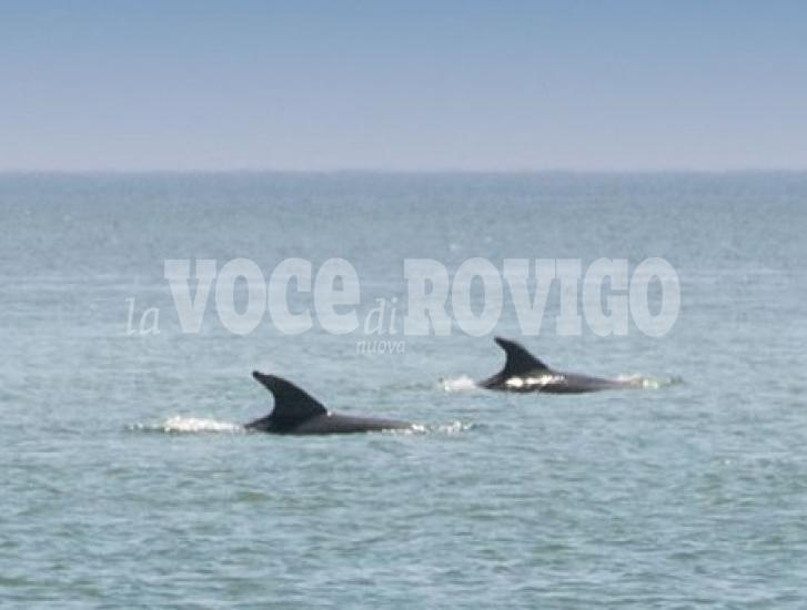 Lo spettacolo dei delfini nel Delta