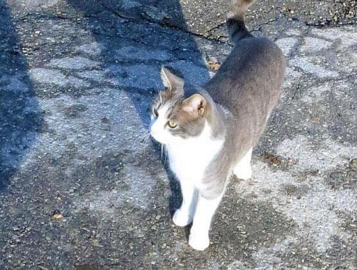 Per evitare un gatto finisce fuori strada