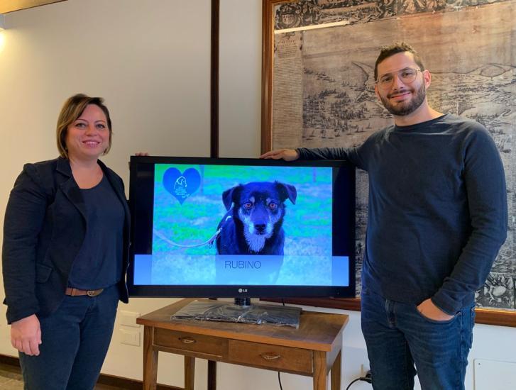 Il Comune trova casa ai cuccioli senza famiglia