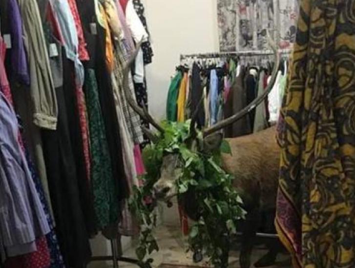 Cervo spaventato entra nel negozio di moda e si camuffa fra i vestiti