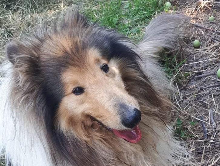 Orrore in paese: il cagnolone Jack ammazzato a fucilate