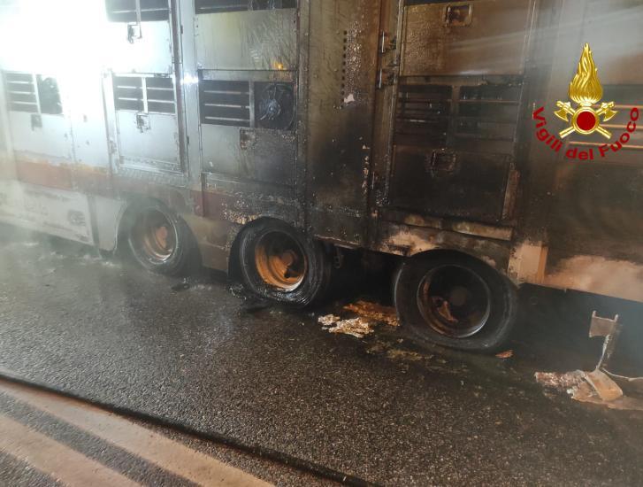 Camion a fuoco, l'autista salva tutti e 38 i bovini che trasportava