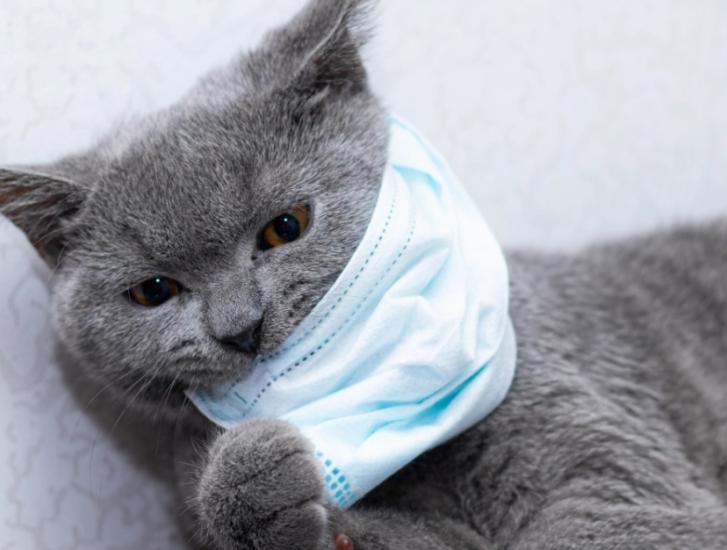 Niente mascherina per il gatto di casa