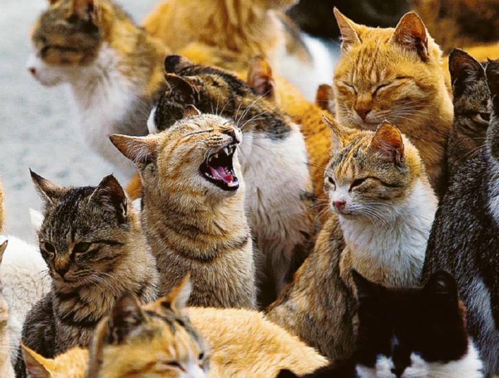 Quattrocento firme per sfrattare i gattini