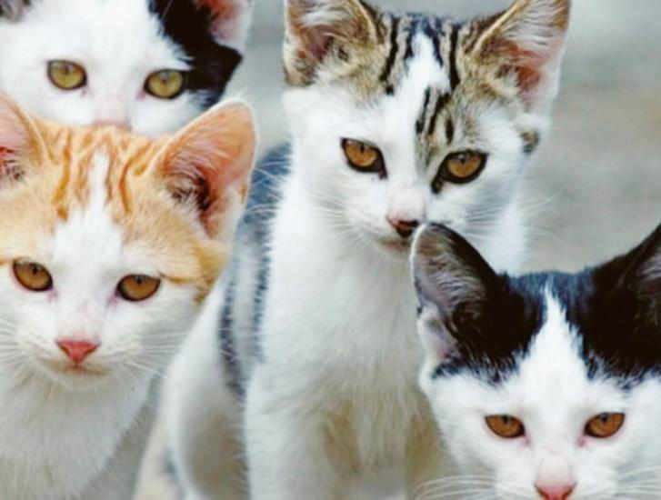 """""""I gatti restino nel loro habitat"""""""