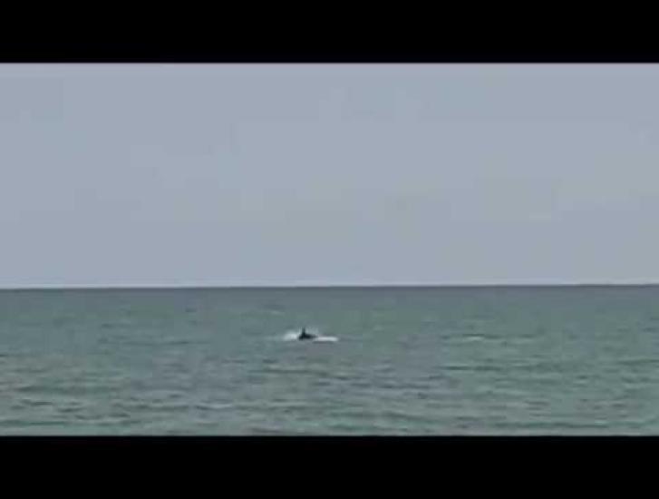 Spettacolo unico! Avvistamento di delfini a Rosolina Mare