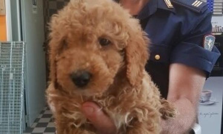 Traffico Di Cani Cuccioli Salvati In A13 La Voce Di Rovigo