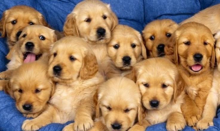 Vendita Di Cuccioli Online Dietro Si Nascondeva Una Truffa La
